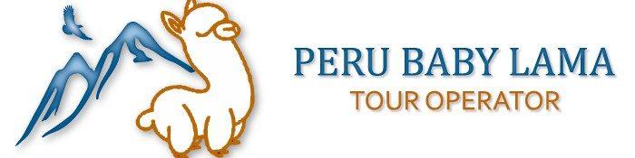 Peru Baby Lama